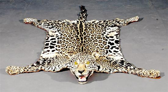 Leopard Skin Rug Full Mounted Head And Paws