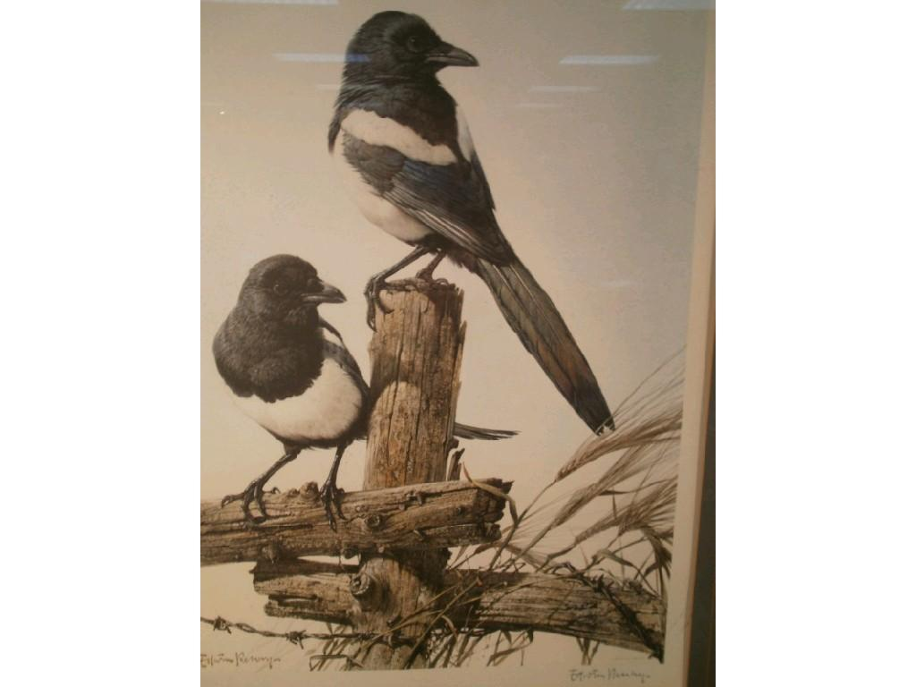 price guide for edwin penny birds artist signed print