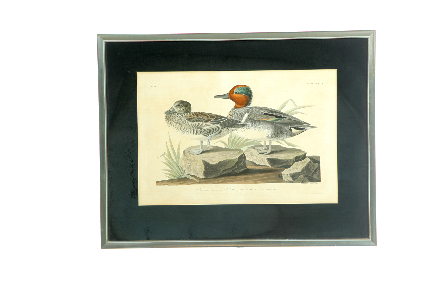 "FRAMED AND MATTED AUDUBON PRINT ""AMERICAN"