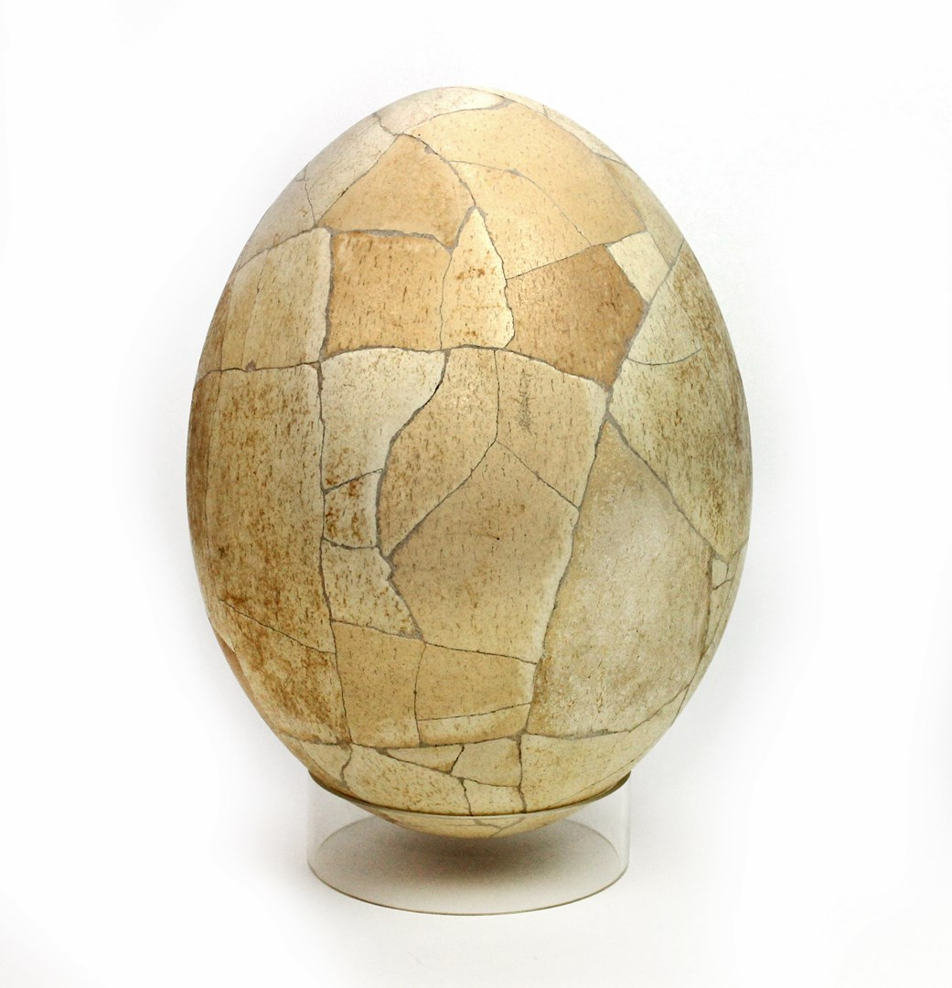 A composite elephant bird egg, Madagascar,