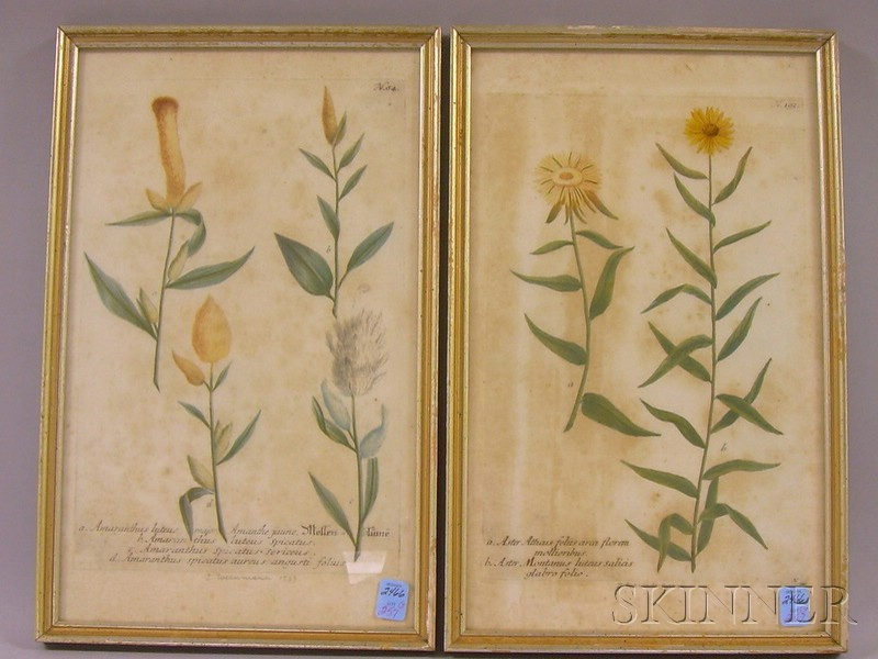 Lot of Three Hand-colored Sporting and Botanical