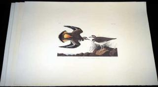 4Pcs Birds Of America ANTIQUE AUDUBON LITHOGRAPHS